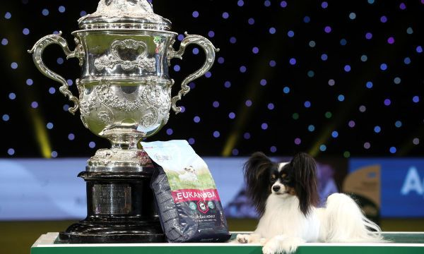 'Dylan the villain' wins Crufts dog show